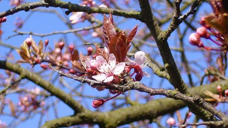 spring tree flowering #3, pink edition, via FlickR CC license by q8
