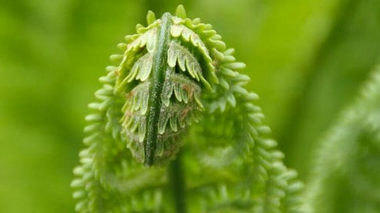 """Une étude menée par des chercheurs australiens, britanniques et italiens montre que les plantes """"répondent"""" aux sons par des bruits de """"cliquetis"""". Photo flickR CC license by Eirik Newth"""