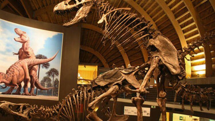 Reconstruction de la reproduction de deux Tyrannosaures rex au MUJA (musée d'histoire naturelle de Colunga, Espagne). Wikimedia.