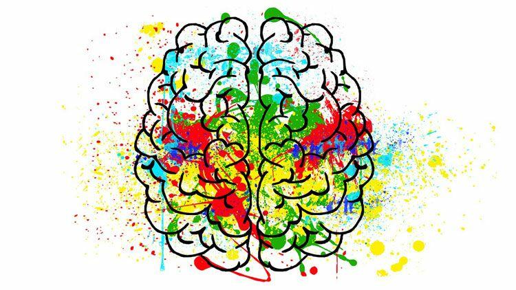 cerveau, adulte