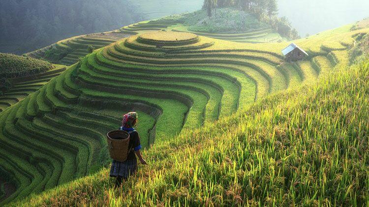 riz, rizière