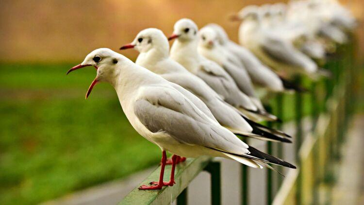 Les Oiseaux S Essouflent Ils Ca M Interesse