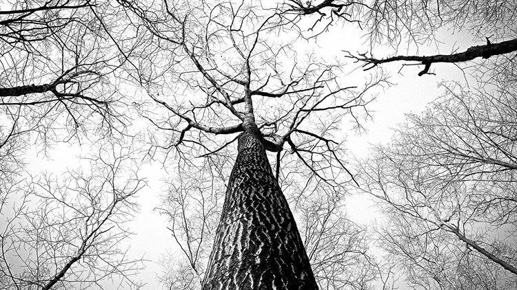 arbre, seve, vegetal