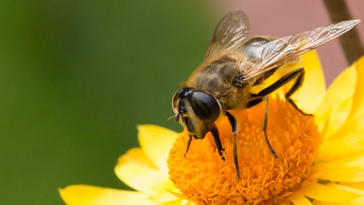 abeille, miel, apiculture