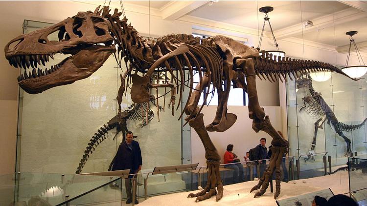 Dinosaure, t-rex