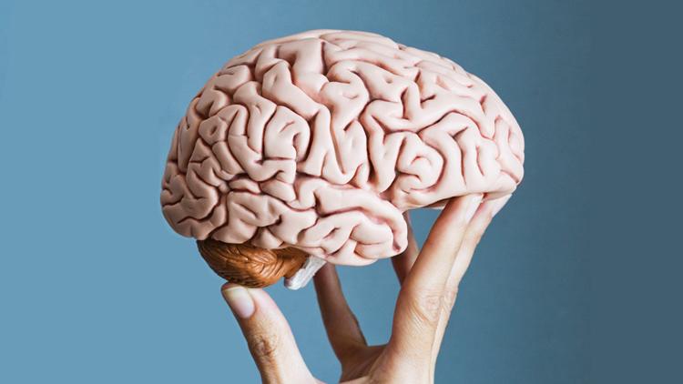 Cerveau, poids, corps humain