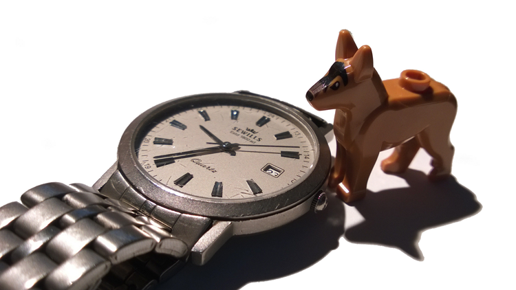 Chien, montre