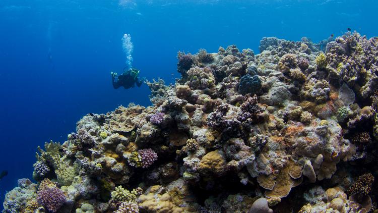 Océans, réchauffement climatique
