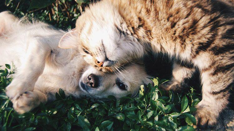 chat et chien, paix, amitié