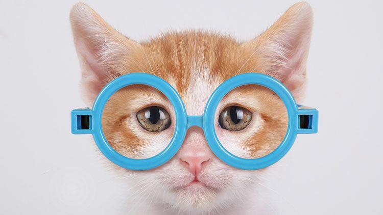 chat, lunettes, problèmes de vue