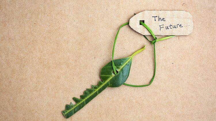 écologie, feuille, clef, clé