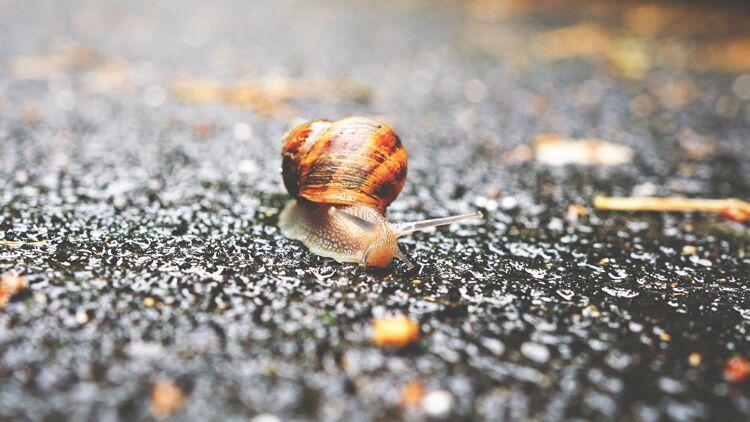 escargot, pluie