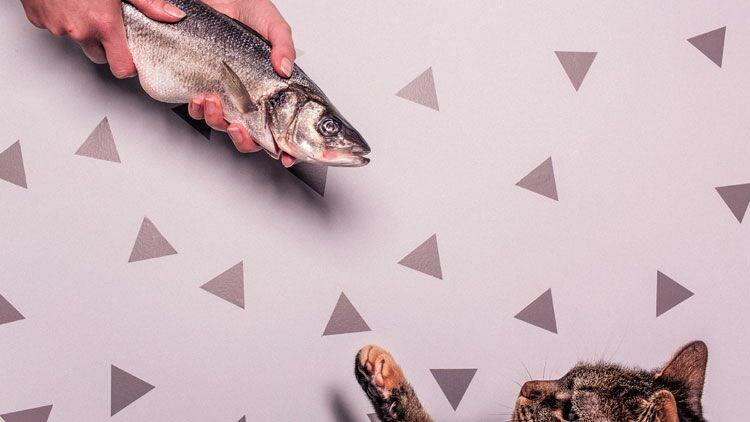 poisson, vendredi, religion chrétienne