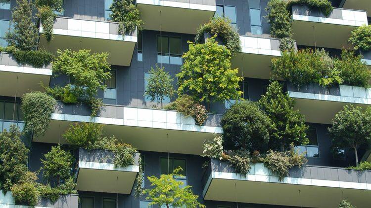 arbre, balcon, ville, mur végétal