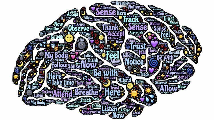cerveau, régions cérébrales