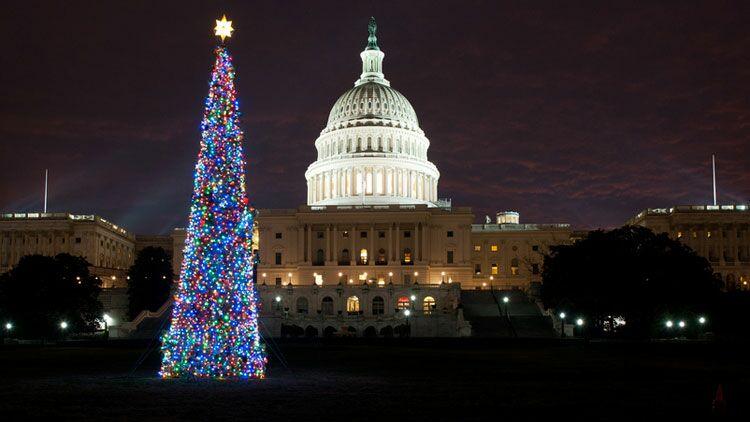sapin, Noël, guirlande, Capitole
