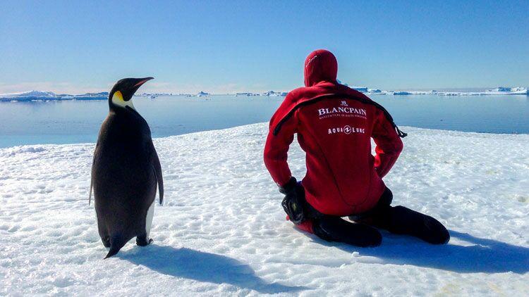 manchot, antarctique, expédition