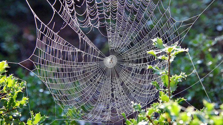 araignée, toiles