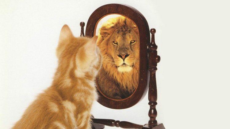 méthode Coué, chat, miroir, tigre