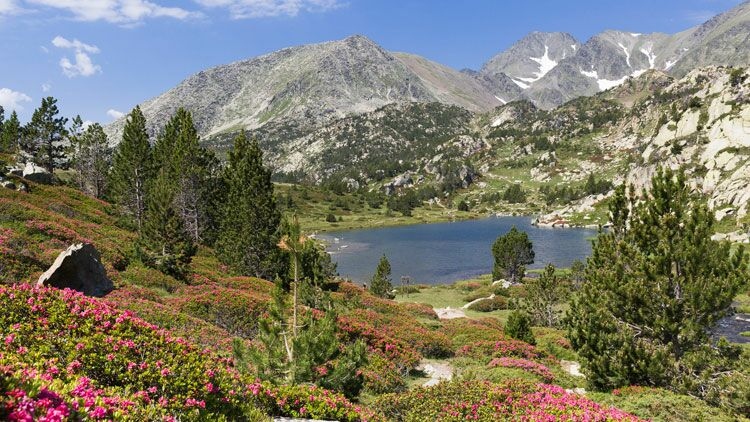 lac, nature, se ressourcer