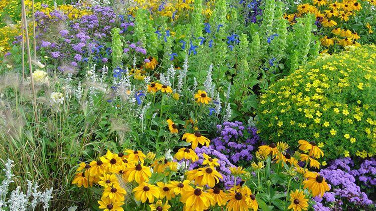 flore, végétaux, plantes