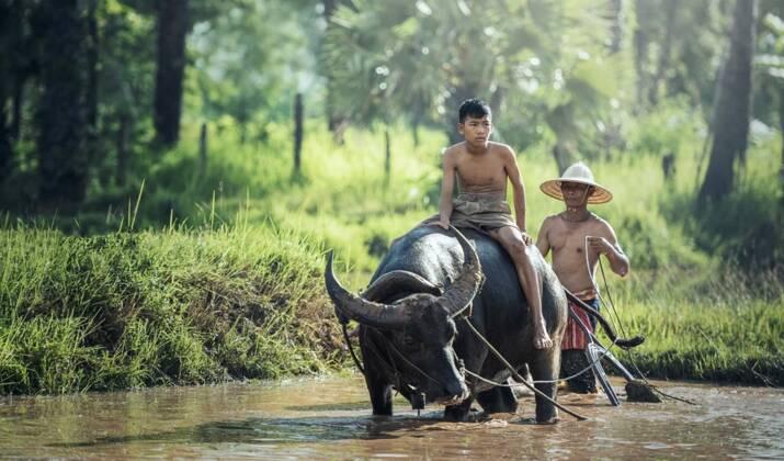 Les images rares d'un rhinocéros de Java surpris à se prélasser dans un bain de boue