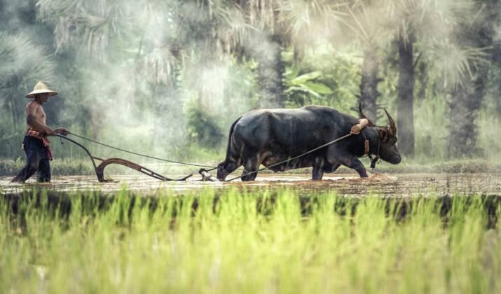 VIDÉO - Au Laos, un barrage géant menace les ressources alimentaires