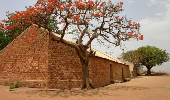 Mali : tout savoir sur le gombo, le roi des légumes africains