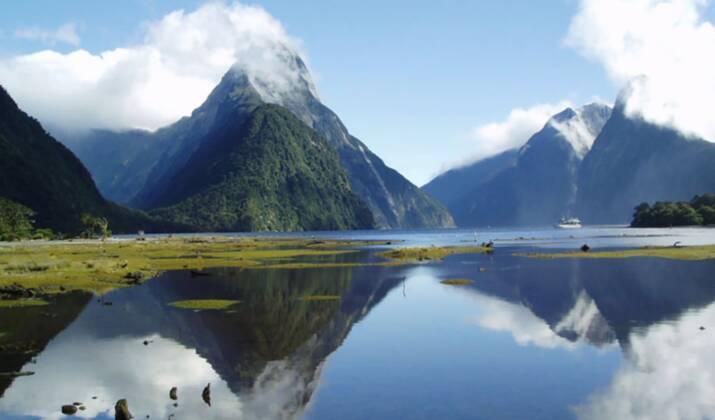 Une caméra immortalise l'atterrissage raté d'un albatros en Nouvelle-Zélande
