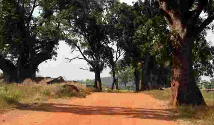 VIDÉO - Dans ce village du Burkina Faso, le crocodile est le meilleur ami de l'homme