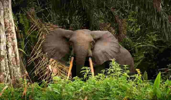 Le Gabon, 1er pays africain payé pour ses efforts contre la déforestation