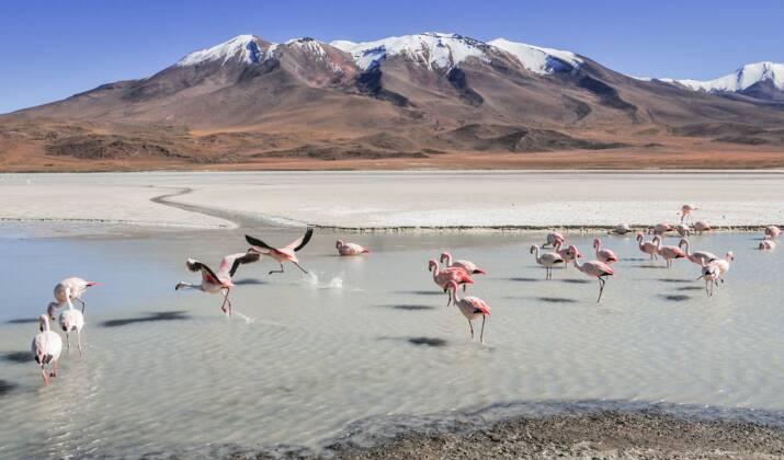 Le lac Poopó, l'un des plus grands de Bolivie, est sur le point de disparaître