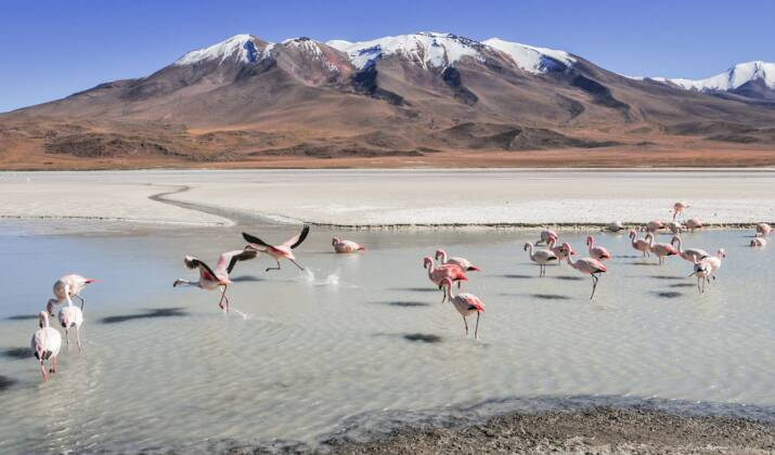Le lithium, or blanc de la Bolivie ?