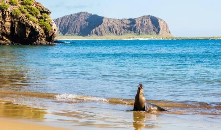 """Equateur : un """"rare"""" manchot blanc découvert dans l'archipel des Galapagos"""