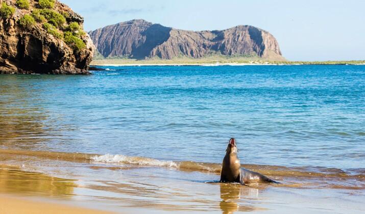 Aux Galápagos, 1400 iguanes réintroduits sur une île deux siècles après leur disparition