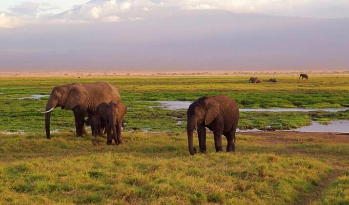 Au Kenya, délicate opération pour sauver des girafes piégées sur une île