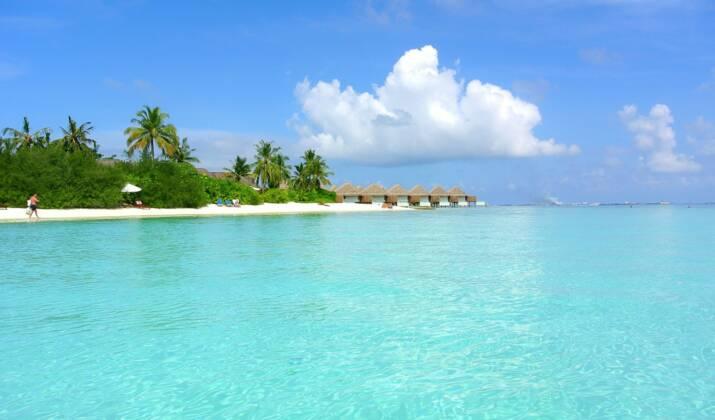 Aux Maldives, une tortue retourne pondre sur sa plage natale… transformée en piste d'atterrissage