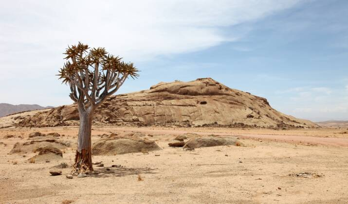 En Namibie, l'espoir renaît pour les guépards