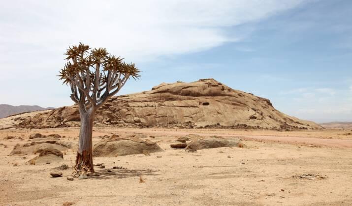 VIDÉO – Namibie : une force de la nature