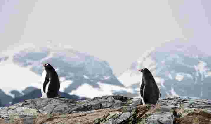 Souvenirs d'Antarctique : les images incroyables d'un voyage inoubliable