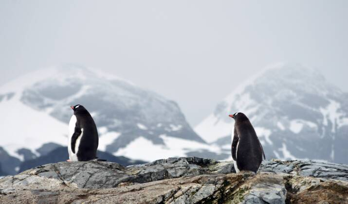 La péninsule Antarctique : ses scientifiques, ses manchots, ses touristes