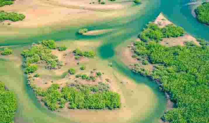 A Dakar, un rêve de Central park pour faire reculer le béton
