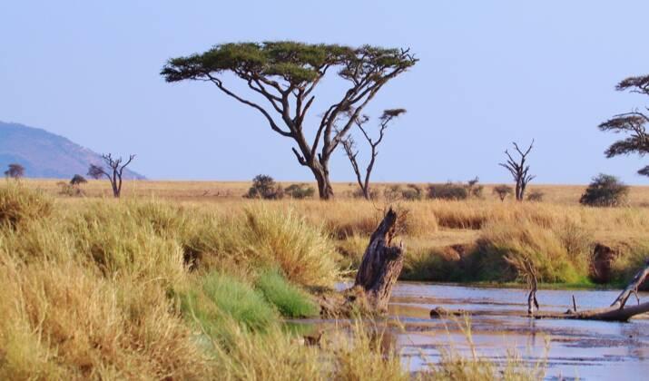 Tanzanie : une mère et son fils tentent l'ascension du Kilimandjaro