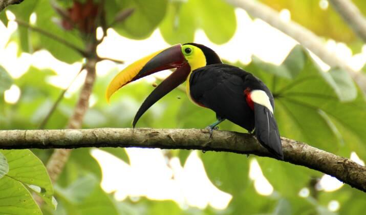 Au Costa Rica, une campagne pour dénoncer les selfies avec les animaux sauvages