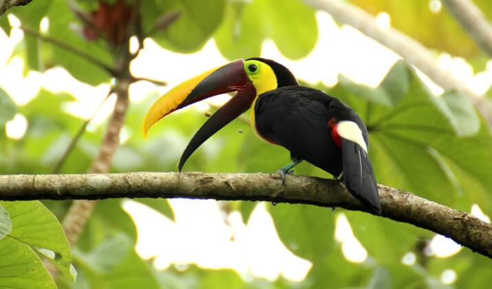 Costa Rica : Nicoya, la péninsule des centenaires