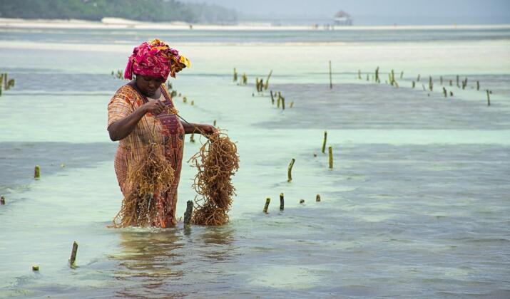 Plongée dans le récif corallien de Zanzibar