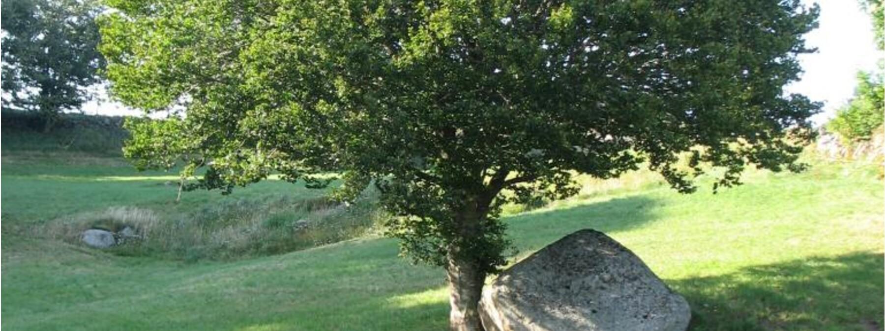 pierre Bonnefoy