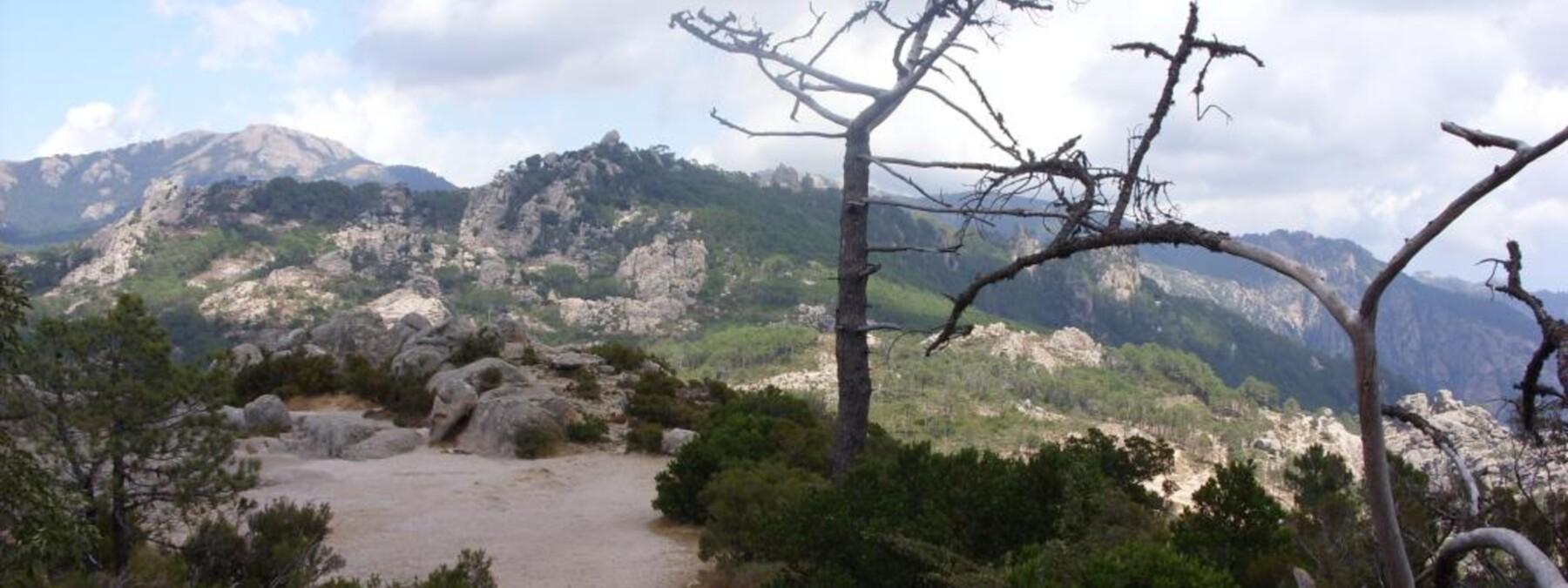 francois plateau