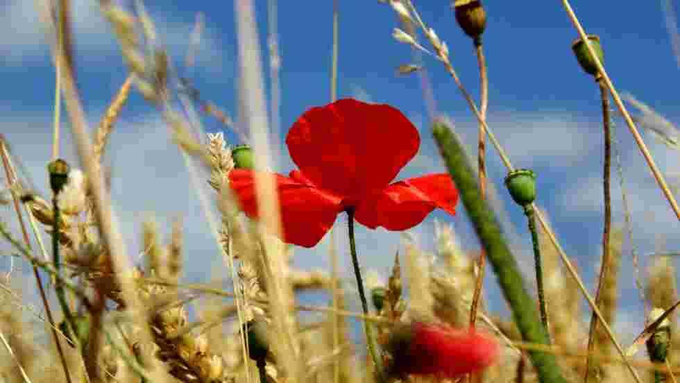 Fleur Fond D Ecran Et Image Gratuits Geo Fr