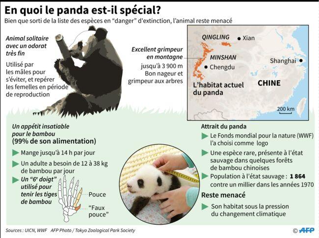 Vidéo Au Zoo De Beauval Yuan Meng Le Panda Fête Son Premier